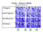 tcgr mature mirna window 5 pattern 3