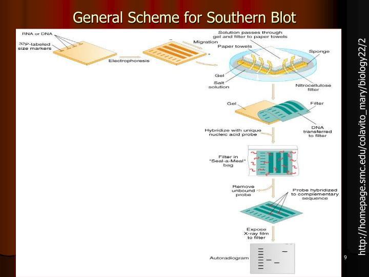 General Scheme for Southern Blot
