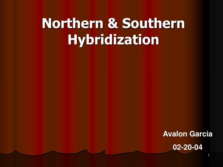 Northern southern hybridization