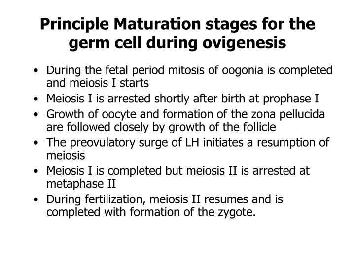 Principle Maturation stages for the germ cell during ovigenesis