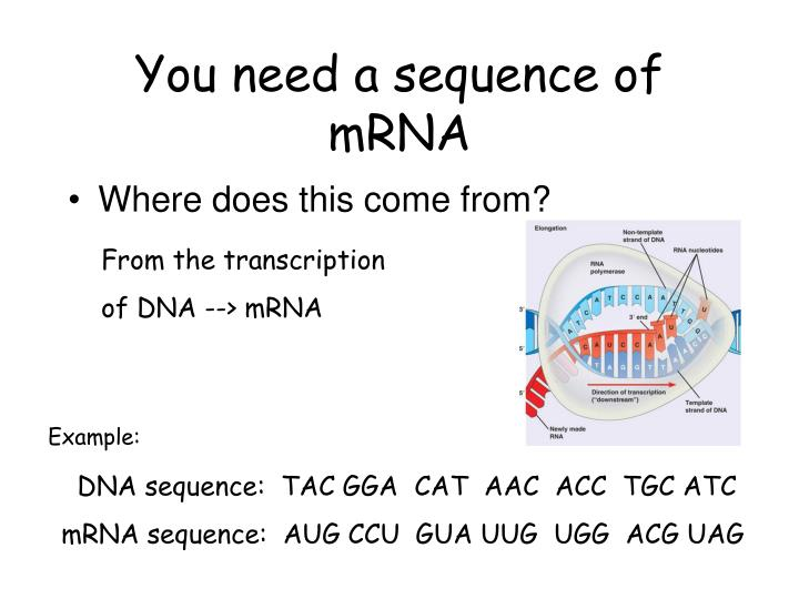 You need a sequence of mrna