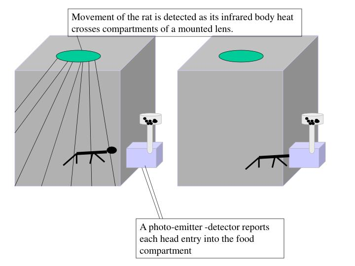Movement of the rat is detected as its infrared body heat crosses compartments of a mounted lens.