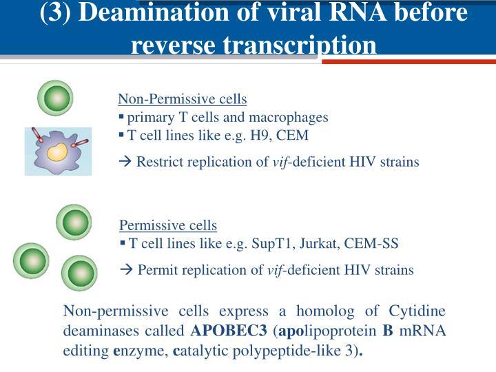 (3) Deamination of viral RNA before reverse transcription
