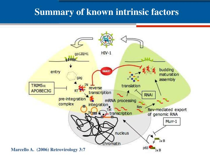 Summary of known intrinsic factors