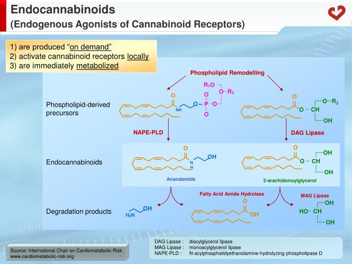 Endocannabinoids endogenous agonists of cannabinoid receptors