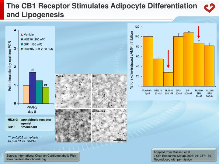 The cb1 receptor stimulates adipocyte differentiation and lipogenesis