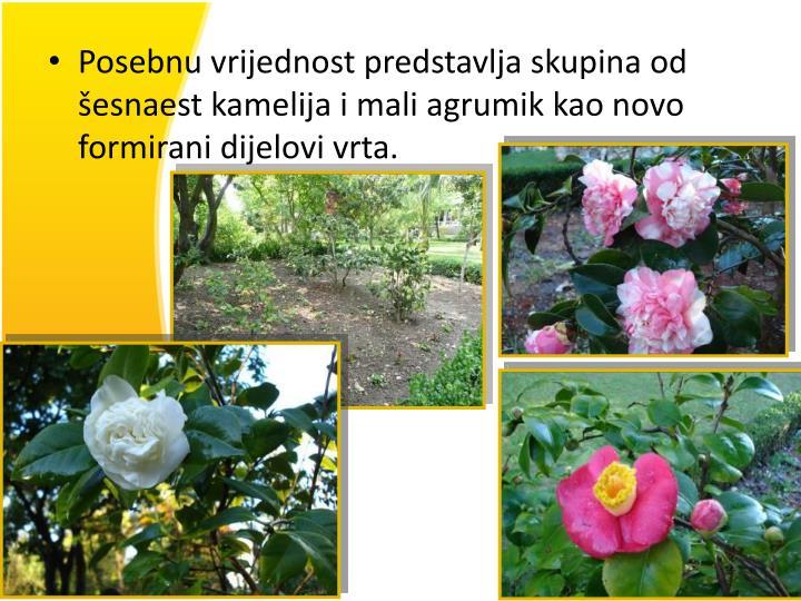 Posebnu vrijednost predstavlja skupina od šesnaest kamelija i mali agrumik kao novo formirani dijelovi vrta.