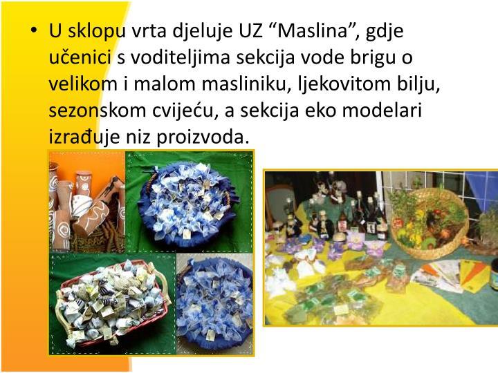 """U sklopu vrta djeluje UZ """"Maslina"""", gdje učenici s voditeljima sekcija vode brigu o velikom i malom masliniku, ljekovitom bilju, sezonskom cvijeću, a sekcija eko modelari izrađuje niz proizvoda."""