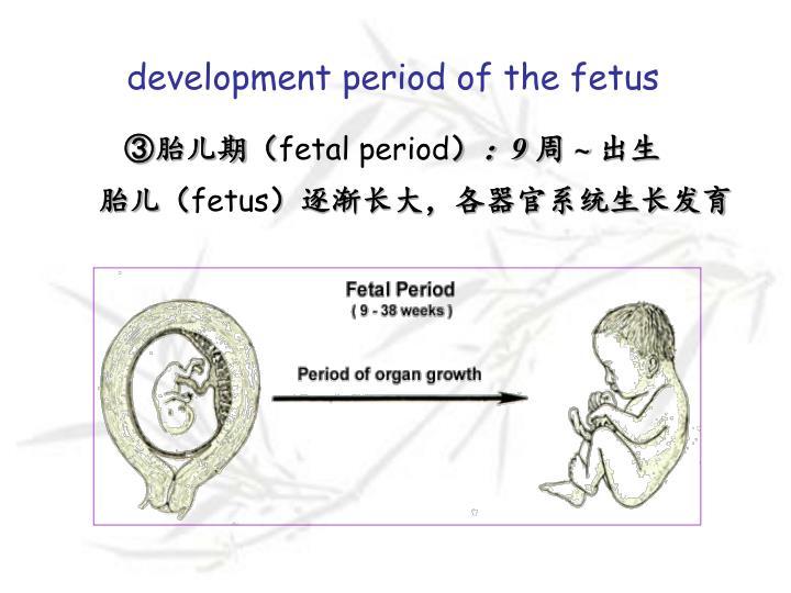 development period of the fetus
