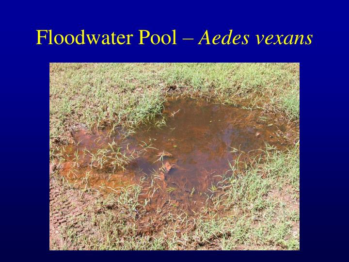 Floodwater Pool –