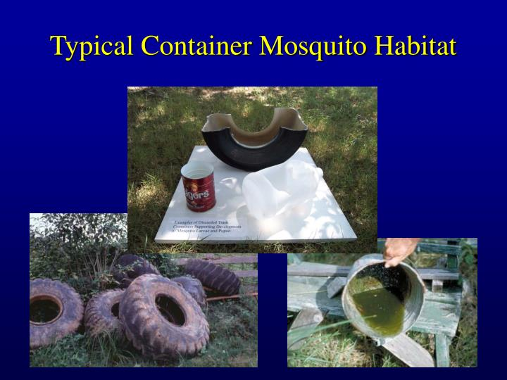 Typical Container Mosquito Habitat