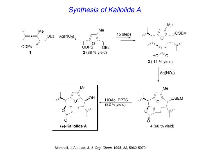 Synthesis of Kallolide A