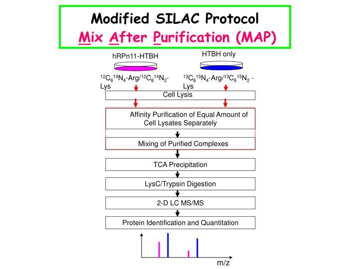 Modified SILAC Protocol