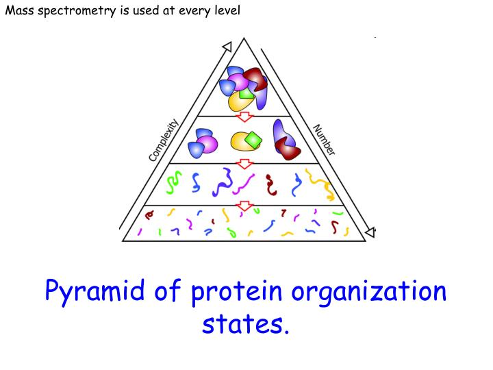 Mass spectrometry is used at every level