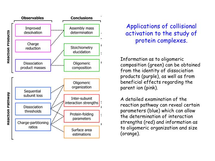 Applications of collisional activation to the study of protein complexes.