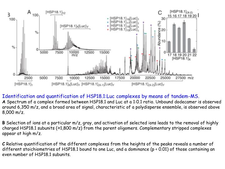 Identification and quantification of HSP18.1:Luc complexes by means of tandem-MS.