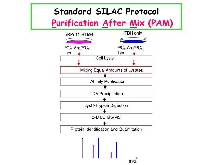 Standard SILAC Protocol