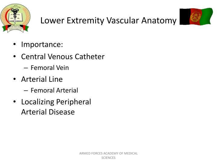 Ppt Cardiovascular Anatomy And Physiology Powerpoint Presentation