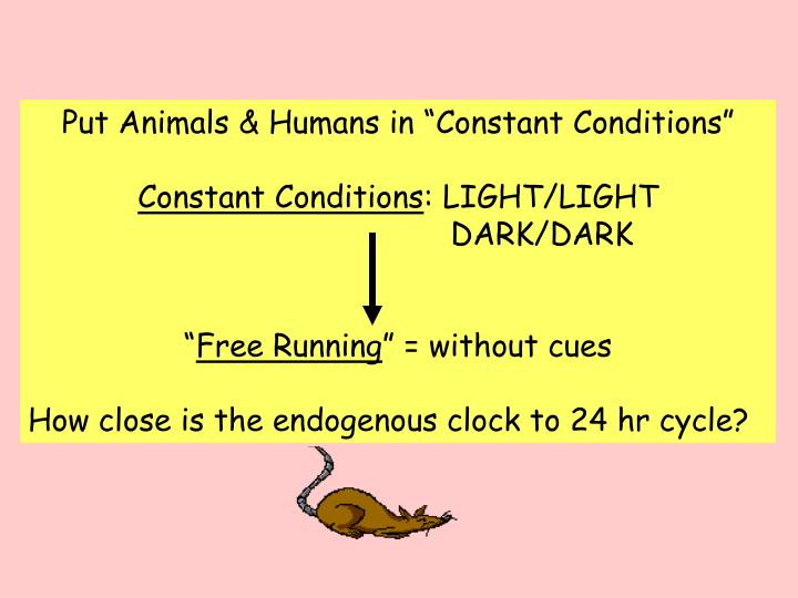 "Put Animals & Humans in ""Constant Conditions"""