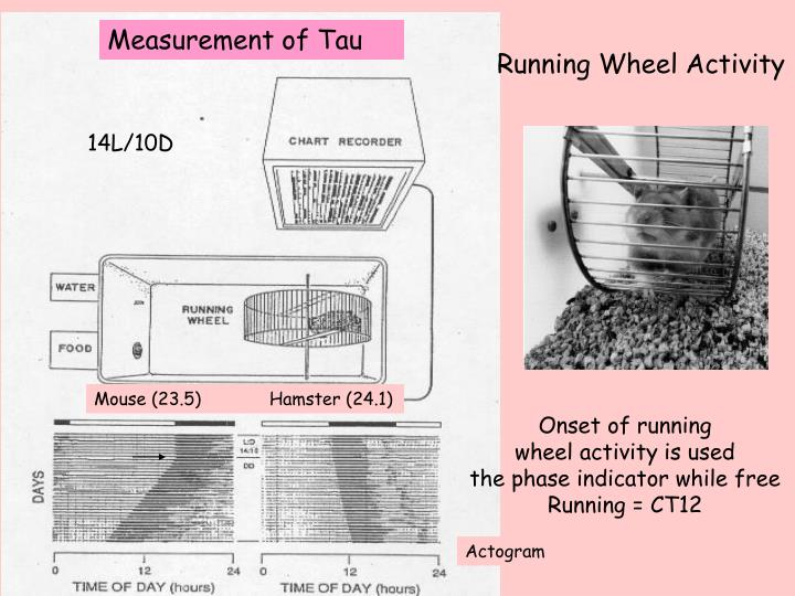 Measurement of Tau