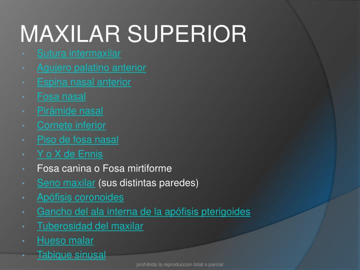 PPT - ANATOMÍA NORMAL EN TÉCNICAS PERIAPICALES PowerPoint ...