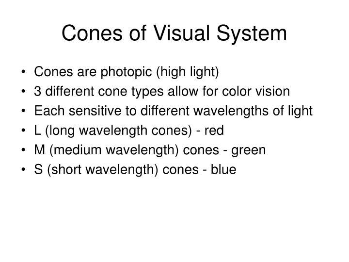 Cones of Visual System