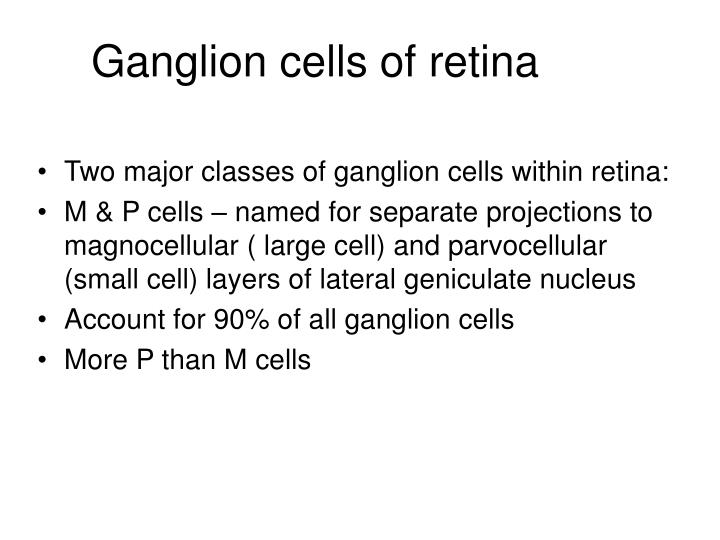 Two major classes of ganglion cells within retina: