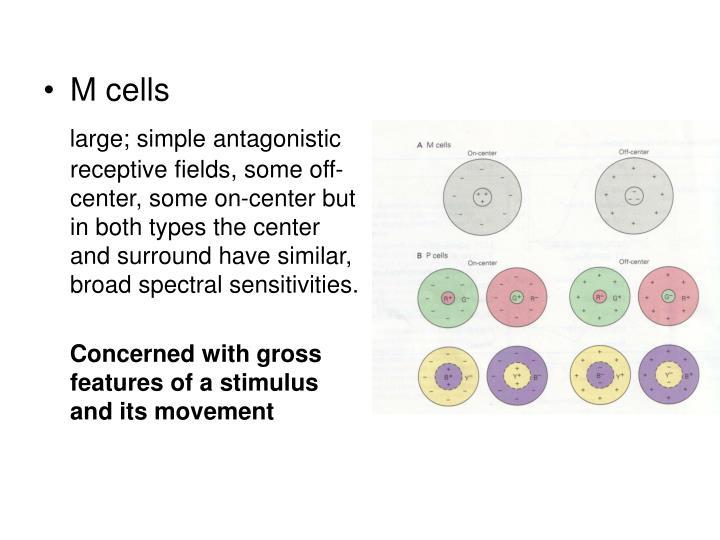 M cells