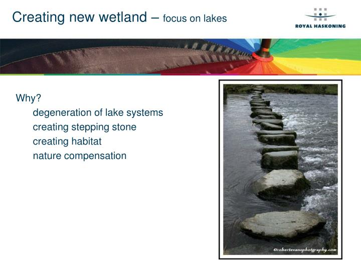 Creating new wetland focus on lakes