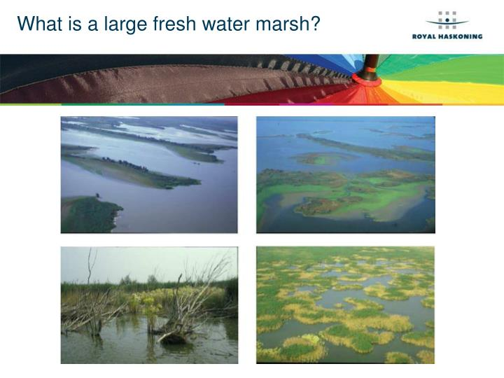 What is a large fresh water marsh?