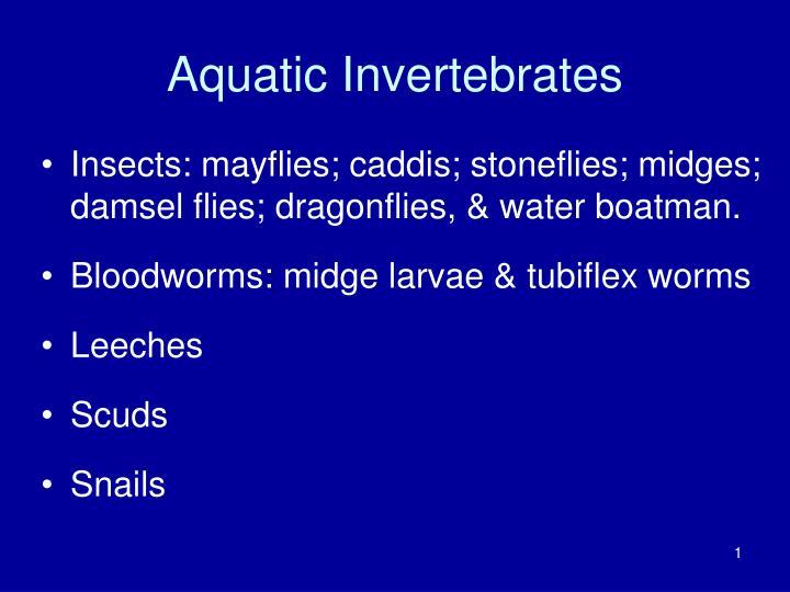 aquatic invertebrates n.