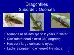 dragonflies suborder odonata