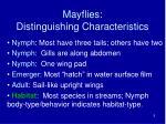 mayflies distinguishing characteristics