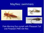mayflies swimmers1