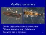 mayflies swimmers2