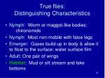 true flies distinguishing characteristics