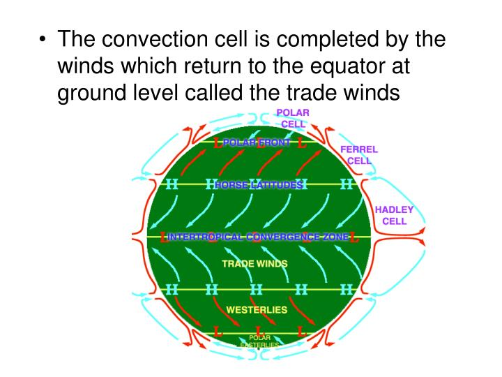 The convection cell is completed by the winds which return to the equator at ground level called the trade winds