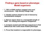 finding a gene based on phenotype model organisms