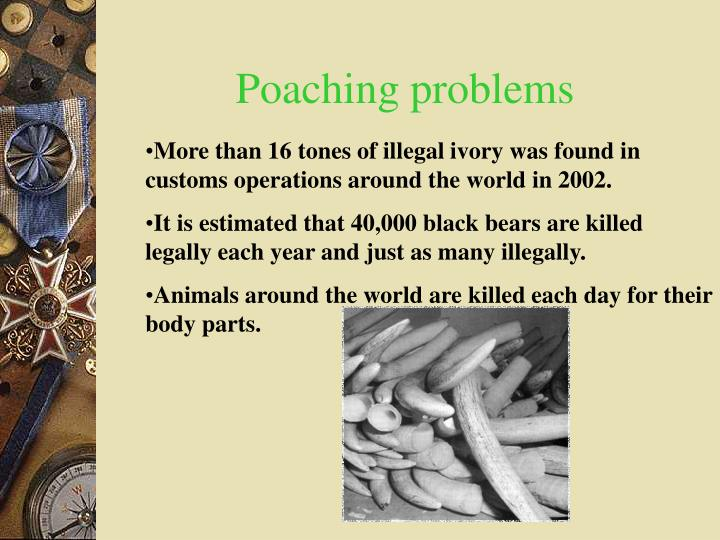 poaching problem essay Essay about effects on poaching rhinos alchol and side effect essay while methamphetamine abuse has classically been seen as a problem of the individual.