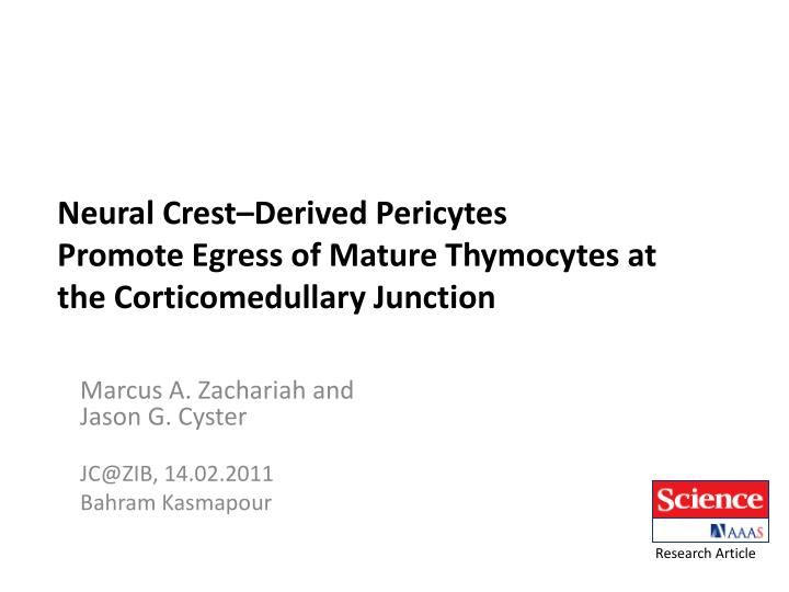 Neural crest derived pericytes promote egress of mature thymocytes at the corticomedullary junction