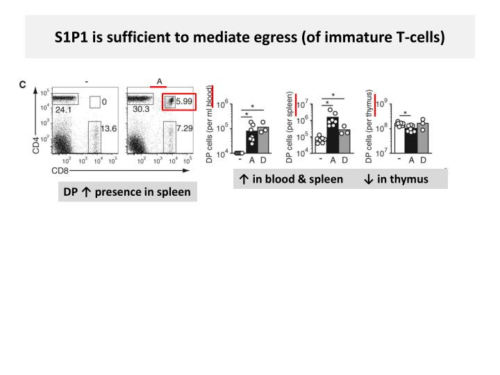 S1P1 is sufficient to mediate egress (of immature