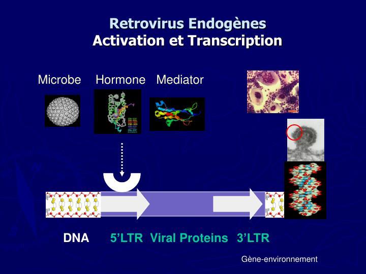 Retrovirus Endogènes