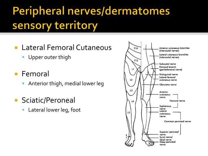 Peripheral nerves/dermatomes sensory territory