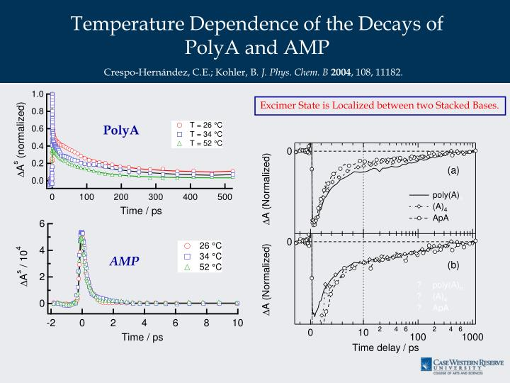 Temperature Dependence of the Decays of PolyA and AMP