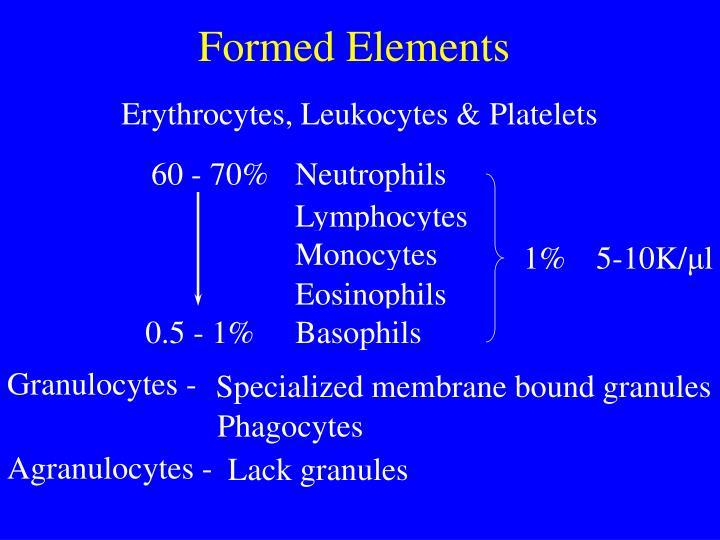 formed elements n.