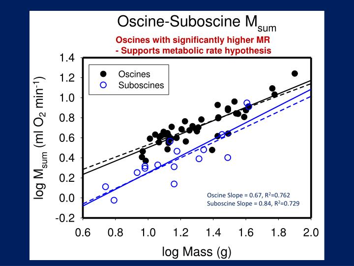 Oscines with significantly higher MR