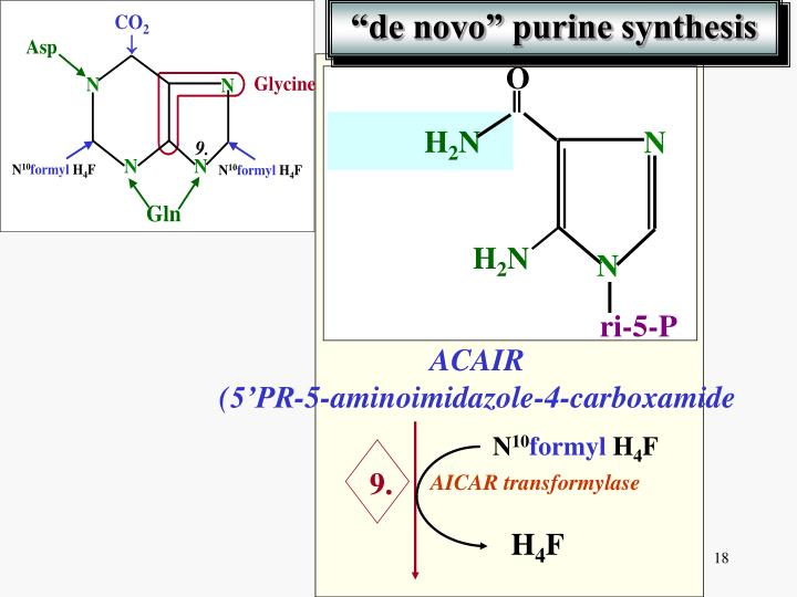 purine sythesis Synthesis of the aromatic amino acids begins with the synthesis of chorismate - an important intermediate for many biosynthetic pathways (specifically purine.