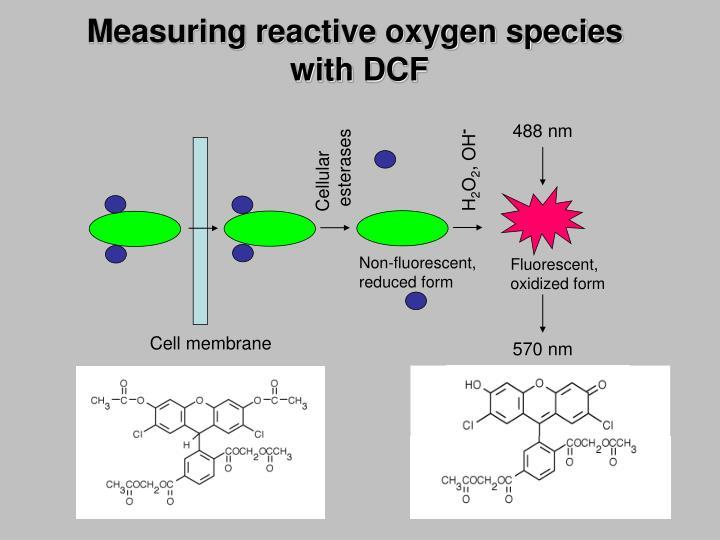 Measuring reactive oxygen species