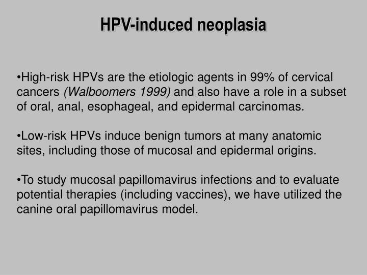 HPV-induced neoplasia
