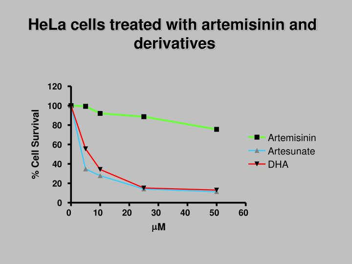 HeLa cells treated with artemisinin and